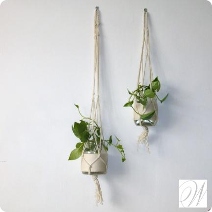 Home Hanging Plants